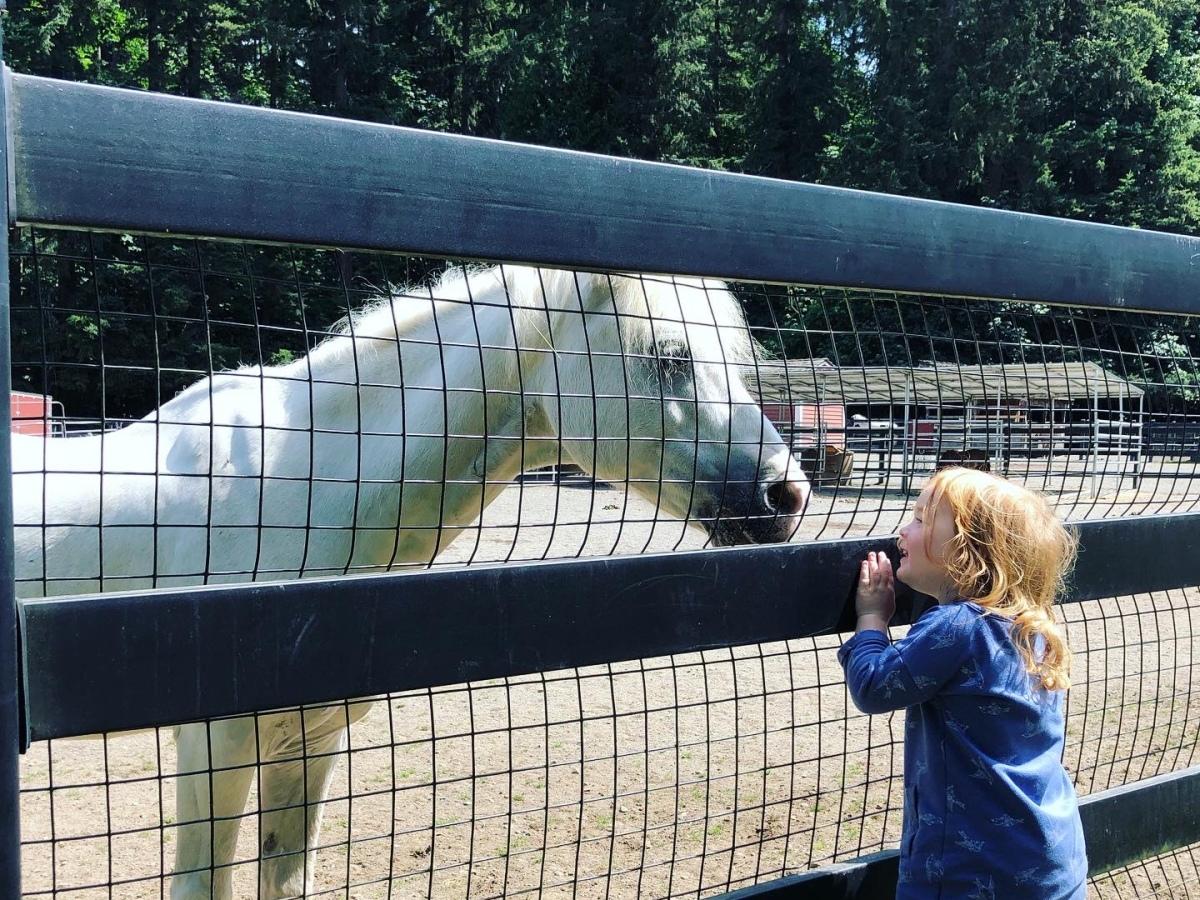 Barnyard Horse at Farrel-McWhirter Farm Park, Redmond, WA